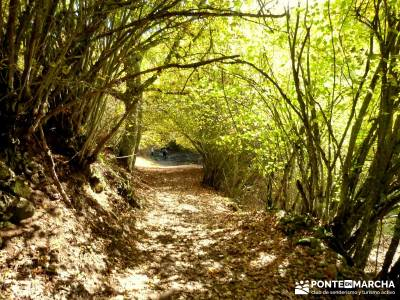 La Dehesa Bonita - Abedular de Somosierra_fin de semana senderismo